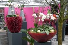 Orchideen Koch, Lennestadt
